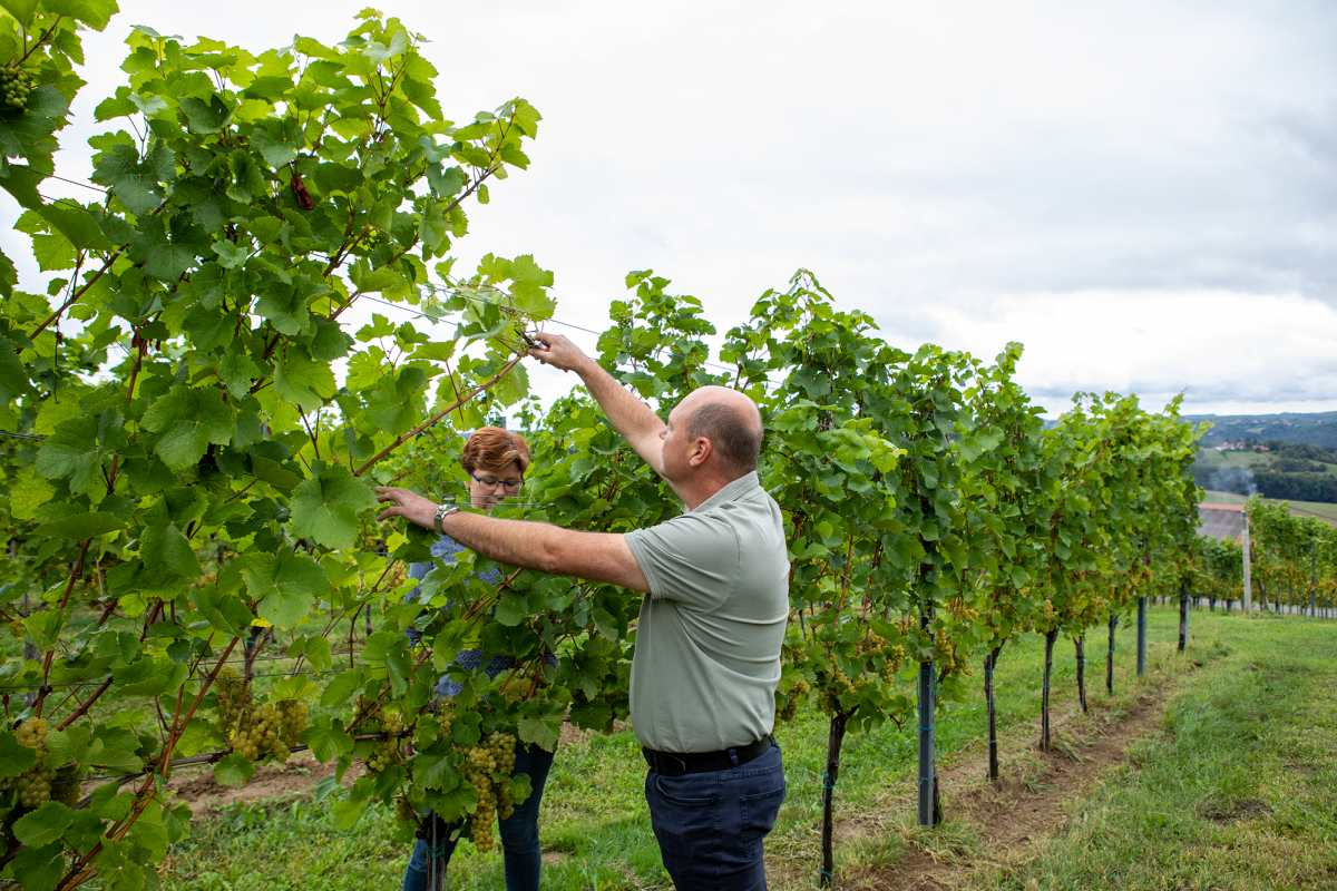 Weingartenpflege